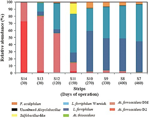 Community structures based on 16S rRNA genes of Bacteria and Archaea species from different strips of the industrial heap. Relative abundances of different microorganisms were evaluated by quantitative real‐time PCR of total DNA from different strips in operation until May 2008.