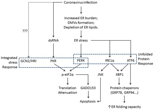 Flowchart Showing The Induction Of Er Stress And Its Ph Open I