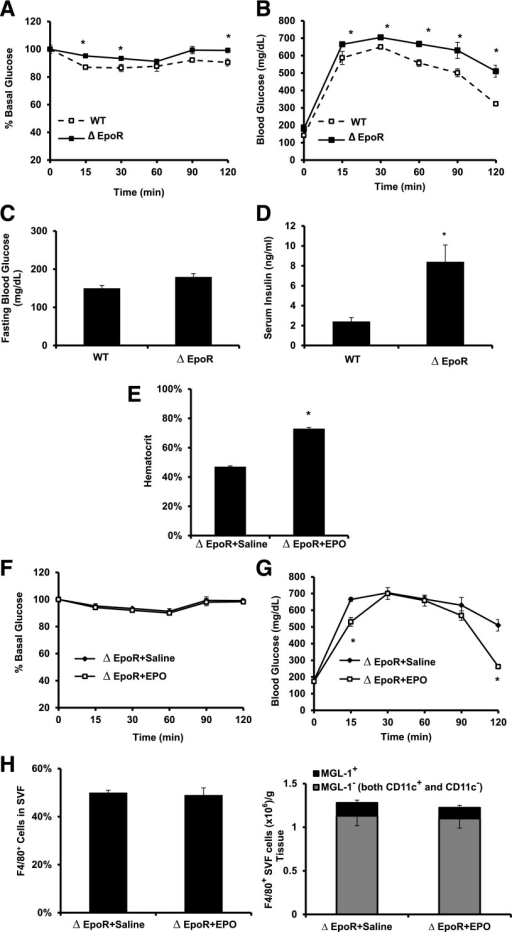 Endogenous EPO/EPO-R signaling and glucose metabolism during DIO. A: For ITT, glucose levels were measured after intraperitoneal injection of 1 unit/kg insulin. B: For GTT, glucose levels were measured after intraperitoneal injection of 1 g/kg glucose. Fasting glucose (C) and serum insulin (D) levels were determined. ∆EpoR mice with DIO, induced by 12 weeks of HFD feeding, were injected subcutaneously with saline or EPO (1,000 units/kg) every 48 h for the final 2 weeks of HFD feeding, and hematocrit (E), ITT (F), GTT (G), and flow cytometry analysis of perigonadal fat SVF cells (H) were determined. All measurements were performed at the end of week 12. Data presented as mean ± SEM for n = 8 mice per group, representative of three independent experiments with similar results. *P < 0.05.