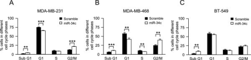 Effect of miR-34c on cell cycle distribution of breast cancer cells. Following transfection of MDA-MB-231 (A), MDA-MB-468 (B) and BT-549 (C) breast cancer cells with miR-34c mimic or negative control for 96 h, nuclei were stained with propidium iodide solution and analyzed for DNA content by flow cytometry. Data (mean ± SEM, n = 5) represent percentage cells in different phases of the cell cycle with miR-34c related to scramble treatment. Asterisks indicate statistically significant differences (* p < 0.05, ** p < 0.01, *** p < 0.001, Student's t-test) compared to control cells.