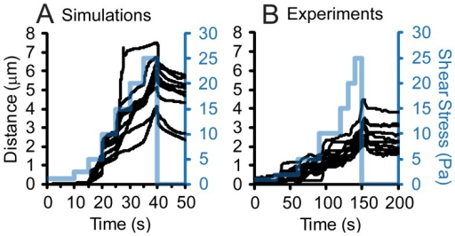 Validation of adhesive dynamics simulations.In simulations (A) and experiments (B), the shear stress was increased stepwise from 1 to 25 Pa, and then dropped back to 0.01 Pa as indicated by the blue lines. The x-positions of several randomly chosen bacteria are shown in black lines.