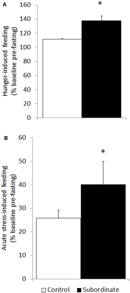 Hyperphagia was further exacerbated in subordinate CD1 mice in response to acute stress (social defeat for 10 min) in the subsequent 6 h (A) as well as to overnight fasting followed by refeeding (B). Data represent group averages ± SEM. (A) Control: N = 15; subordinate: N = 13. (B) Control: N = 15; subordinate: N = 10. *p < 0.05, ***p < 0.001.