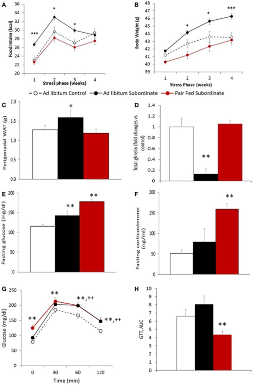 Pair-feeding subordinate mice prevents stress-induced vulnerability to diet-induced obesity. (A) Food intake, data are presented as least square means ± SEM; the covariate is the baseline food intake, average = 22.5 kcal [F(1,49) = 22.24, p < 0.01; ad libitum fed control: N = 12; ad libitum fed subordinate: N = 28; pair fed subordinate: N = 13]; (B) body weight gain, data are presented as least square means ± SEM; the covariate is the baseline body weight, average = 41.2 g [F(1,55) = 198.37, p < 0.001; ad libitum fed control: N = 22; ad libitum fed subordinate: N = 34; pair fed subordinate: N = 13]; (C) perigonadal white adipose tissue (WAT) [ad libitum fed control: N = 12; ad libitum fed subordinate: N = 26; pair fed subordinate: N = 12]; (D) total ghrelin [ad libitum fed control: N = 5; ad libitum fed subordinate: N = 6; pair fed subordinate: N = 8]; (E) glucose [ad libitum fed control: N = 21; ad libitum fed subordinate: N = 26; pair fed subordinate: N = 9]; (F) corticosterone [ad libitum fed control: N = 17; ad libitum fed subordinate: N = 23; pair fed subordinate: N = 8]; (G,H) glucose tolerance test [ad libitum fed control: N = 16; ad libitum fed subordinate: N = 19; pair fed subordinate: N = 13]. (D–H) Data represent group averages ± SEM, *p < 0.05, **p < 0.01, ***p < 0.001 vs. control. In (G), ** refer to binary comparisons between pair fed subordinate and control mice, while ++ refer to binary comparisons between ad libitum fed subordinate and control mice.