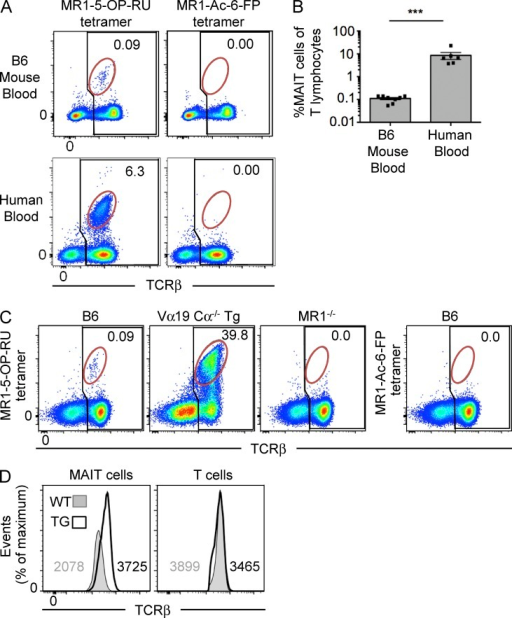 Identification of MAIT cells using MR1 tetramer in mice. (A) Detection of MAIT cells reactive to MR1–5-OP-RU tetramer in human and mouse blood. Flow cytometry analysis of human and mouse blood showing reactivity to MR1–5-OP-RU tetramer (left) or MR1–Ac-6-FP tetramer (negative control; right). Numbers indicate the percentage of MAIT cells (red gate) of total αβ T cells (black gate). Data are representative of four separate experiments with a combined total of n = 6 human blood samples and 9 mouse blood samples. (B) Scatter plot depicts MAIT cells as a proportion of T lymphocytes in mouse and human blood, gated as shown in A. Bars depict mean ± SEM of n = 6 human blood samples and 9 mouse blood samples derived from four separate experiments. ***, P < 0.001 using a Mann-Whitney rank sum U test. (C) B6, Vα19 Cα−/− transgenic (Tg) MR1+, or B6-MR1−/− spleen cells were stained with MR1–5-OP-RU tetramer (left three plots) or MR1–Ac-6-FP tetramer (far right plot). Numbers indicate the percentage of MAIT cells (red gate) of total αβ T cells (black gate). Data are representative of two independent experiments with a combined total of four mice. (D) Intensity of TCR-β staining on WT and transgenic MAIT cells is depicted as histograms, representative of four independent experiments with a combined total of six mice. Numbers depict mean fluorescence intensity.