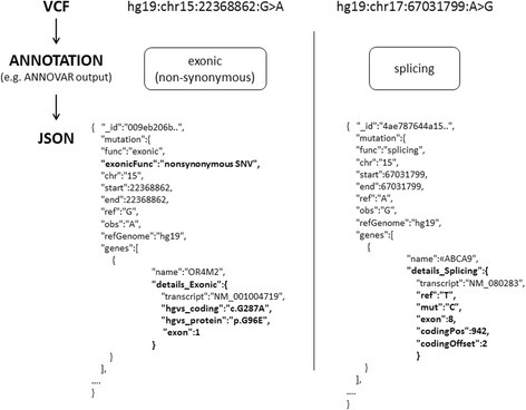 Example of annotated variants in JSON format. Two variants, represented in VCF format, are identified by standard attributes (reference genome, chromosome, variant position and nucleotide changes). The annotation step finds out that one variant falls in an exon causing an amino acid substitution at the protein level (non-synonymous) while the other is located in a transcript splicing site. The two variants generate two different JSON objects, characterized by different attributes. Differences between JSONs are highlighted in bold