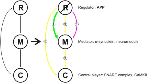 Scheme illustrating the regulatory role of APP in a context-sensitive manner at the hippocampal PAZ. R, regulator; M, mediator, C, central player.Color code: magenta, upregulation (in APP-mutants); green, downregulation (in APP-mutants); yellow, unaltered.