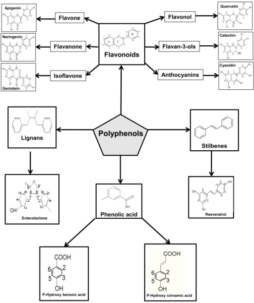 Diagram summarizing the classes of polyphenols and their basic chemical structures. Polyphenols can be separated into two main classes: flavonoids and non-flavonoids. The flavonoid class consists of two benzene rings, linked by a heterocyclic pyrone C-ring. The non-flavonoids class contains more intricate molecules, namely, benzoic acid, hydroxycinnamates, stilbenes, lignans, gallic acids tannins, and gallotannins.