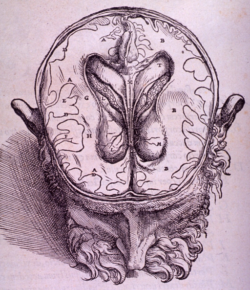 <p>Illustration very similar to page 608, showing the brain dissected below the cerebrum.</p>
