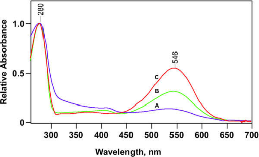 UV/visible absorption spectra of pR in octylglucoside solution (1–3%) at three stages of purification. All three spectra were measured in the presence of octylglucoside at pH 8, and are normalized to the 280-nm protein peak. Spectrum A, the OG extract of cholate-washed E. coli membranes; spectrum B, pooled 546-nm absorbing fractions from Phenylsepharose column; spectrum C, same material after hydroxylapatite column.