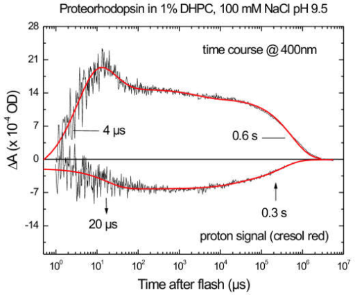 Comparison of the kinetics of M formation and decay with kinetics of ET release and uptake. The time trace of the M-like intermediate was measured at 400 nm (upper panel). Time-resolved H+ concentration changes (lower panel) were measured with the pH indicator dye Cresol Red. A negative Cresol Red absorbance change at 580 nm is indicative of a transient decrease in the pH of the solution, i.e. of H+ release by pR. Solid lines represent multiexponential fits, with the main rise and decay times indicated for the M intermediate. The H+ release and uptake time constants obtained from the fit are marked with arrows pointing down for release and pointing up for uptake. Sample and excitation conditions are as in fig. 4.