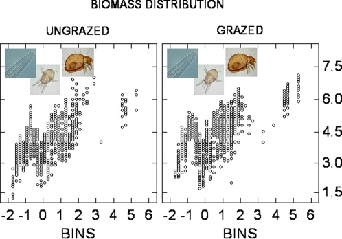 Distributions of log-transformed faunal biomass (ordinate) along a body size gradient (abscissa) for ungrazed and grazed agroecosystems.After lumping, grazed sites have but a higher biomass contribution of bacterial-feeding nematodes and a lower biomass contribution of hyphal-feeding enchytraeids than ungrazed sites. This structural compensation has at least two main consequences, one for the microbial consumption (microfauna grazing on bacteria, mesofauna browsing fungi) and the other for the soil aggregation and humification by larger arthropods. The peak in the biomass around 0.5 log(M) reflects the activity of gamasid mites (Lysigamasus, Protodinychus, Uropoda etc.) and predatory nematodes such as Aporcelaimellus. Some typical genera are shown: from left to right, Chiloplacus, a bacterial-feeding nematode highly tolerant for grazing pressure and land-use intensity, the predatory mite Alliphis and the microphytophagous Rhysotritia [10].