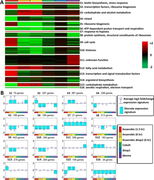 Expression signatures identified by perturbation of the oxygen regulatory network.(A) Heat maps showing real-valued expression profiles of genes that are members of the 16 signatures identified. The expression values are in log2. The rows represent genes and the columns represent the 6 experimental conditions. Bright red indicates strong upregulation, bright green indicates strong downregulation, and black indicates no change in expression. Each signature is labeled with statistically significant functional annotations. (B) Each block displays the average real-valued expression (stem plot in dark blue) and discrete expression profile (bar plot in light blue) for each signature over the 6 experimental conditions. The real-valued expression values are in log2.