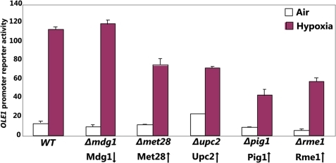 Experimental confirmation of the oxygen regulators identified by MEDUSA.MEDUSA identified Mdg1, Met28, Upc2, Pig1 and Rme1 as specific regulators of the hypoxia-inducible OLE1 gene. To detect the effects of these regulators on the OLE1 gene, the full-length OLE1 promoter-lacZ reporter [39] was transformed into the wild type or mutant cells with one of the indicated genes deleted. β-galactosidase activities were measured in cells grown in air or in hypoxic chamber. Data plotted here are averages from at least three independent transformants. The arrows indicate the effects of hypoxia on the expression levels of Mdg1, Met28, Upc2, Pig1 and Rme1. That is, Mdg1 was downregulated whereas the rest were upregulated in hypoxic cells.