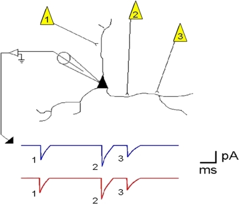 A cartoon illustrating how repeats of action potential sequences in a cortical network can be recorded in a single neuron.The picture depicts a pyramidal neuron being recorded with an intracellular electrode that measures postsynaptic currents (PSCs) during voltage clamp recordings. A series of action potentials in three neurons forming synapses with the neuron can be recorded. The blue trace represents such a sequence that was recorded, and the red trace shows the same sequence repeating at some later time in the recording.