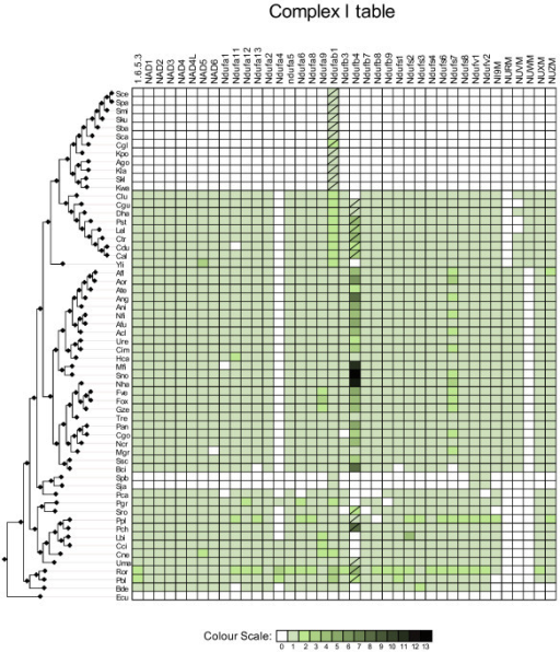 Complex I. Phylogenetic distribution across 60 fungal species of Complex I subunits. Absences of a corresponding ortholog in a given species is indicated with a blank square or a crossed green square. Crossed green squares indicate that no ortholog was found but at least one paralog is present. Presence of orthologs is indicated with uncrossed green squares. The different colour intensities correspond to the number of homologs of the query protein found in that specific genome. The species are ordered according to their phylogenetic position in the fungal species tree [7].
