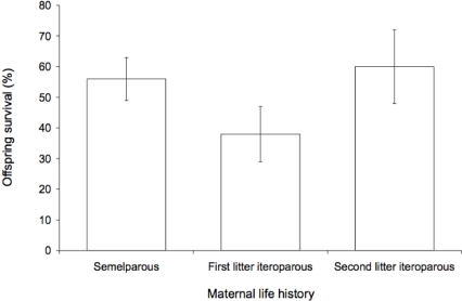 Survival to weaning of nestlings with mothers that were semelparous, iteroparous with first litters, or iteroparous with second litters.Error bars are standard errors.