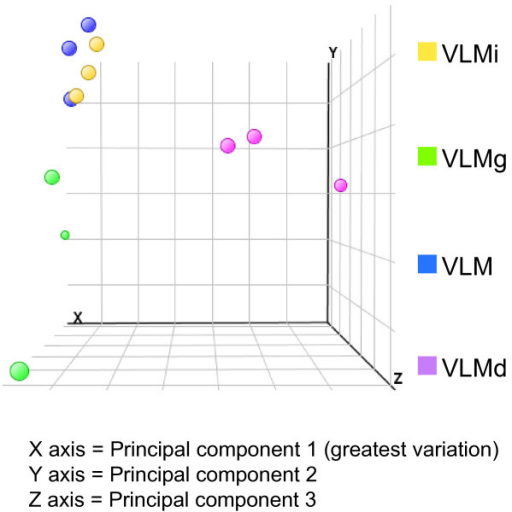 Principal component analysis to identify genome-wide transcriptional variation caused by in ovo electroporation. This plot shows the variation between the samples; each dot represents the global gene expression of a single microarray. The greatest variation is measured on the x-axis, then the y- and z-axes, respectively. Wild-type VLM, VLMi and VLMg samples cluster together on the x-axis, indicating that there is little variation in the gene expression between these three conditions. VLMd, in which the regulatory gene Dmrt5 is exogenously expressed, clusters separately, indicating larger genome-wide variation between this sample and the others.
