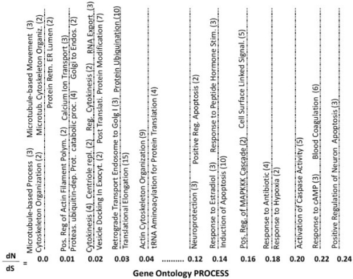 Gene Ontology Process Terms by dN/dS Value. A representative sample of gene ontology process terms associated with the proteins encoded by the feline cDNA sequences were stratified by dN/dS values of cat versus dog, human and mouse. The number of feline cDNAs associated with each annotation term is indicated in parentheses.