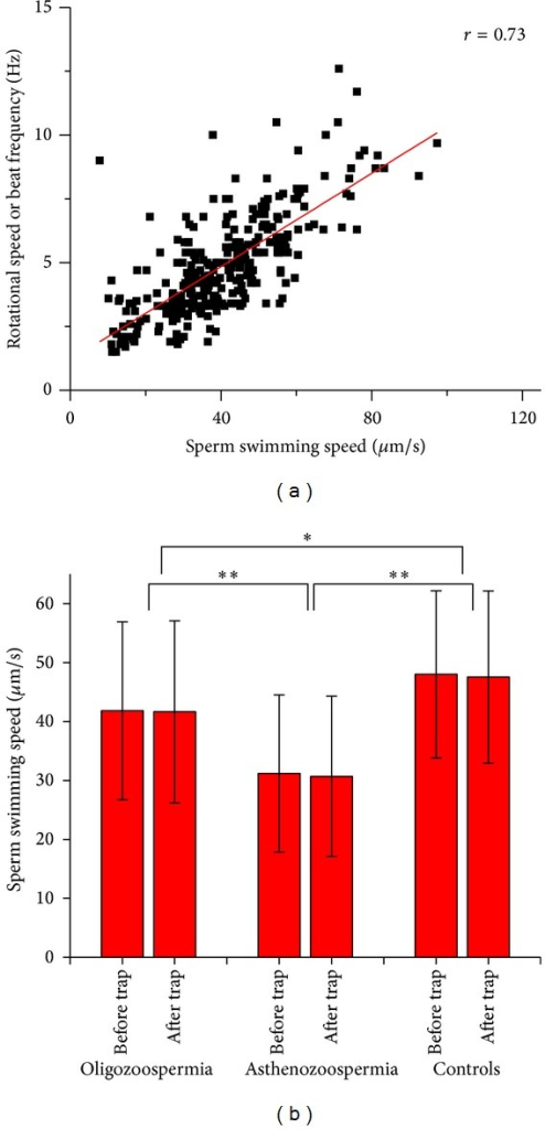 (a) Correlation of sperm swimming speed and rotational speed (beat frequency) of normal and abnormal sperm cells. (b) Measurement and comparison of normal and abnormal spermatozoa swimming speed before and after optical trapping. *P < 0.05, **P < 0.001.