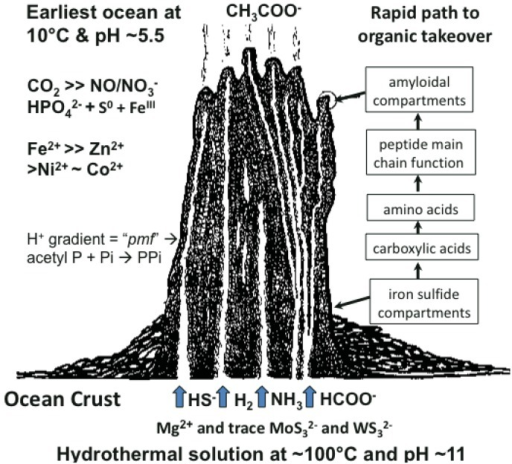 Cartoon of model low entropy environment for the emergence of metabolism via hydrothermal hydrogenation of oceanic CO2, amination of carboxylic acids and the condensation to disordered peptides. These reactions are hypothesized to take place in the outer porous iron sulfide-bearing walls to a submarine hydrothermal mound (see boxes on right of figure). Thermodynamic energy is boosted by the ambient proton-motive force. This force is assumed to have driven pyrophosphate generation, augmenting pyrophosphate of the substrate type formed by catalysis [7,8,20]. Amyloidal peptides eventually take over the role of compartment walls while retaining and nesting inorganic clusters of metals, metal sulfides and phosphate and allowing the transfer of potassium and water across these first membranes/cell walls [16,17]. In this way the properties both of the semipermeable and semiconducting membranous walls and of the catalytic propensities of the inorganic entities improve [21,22]. In this model the emergence of protometabolism from aqueous geochemistry predates transition to the RNA world [10,14,35].