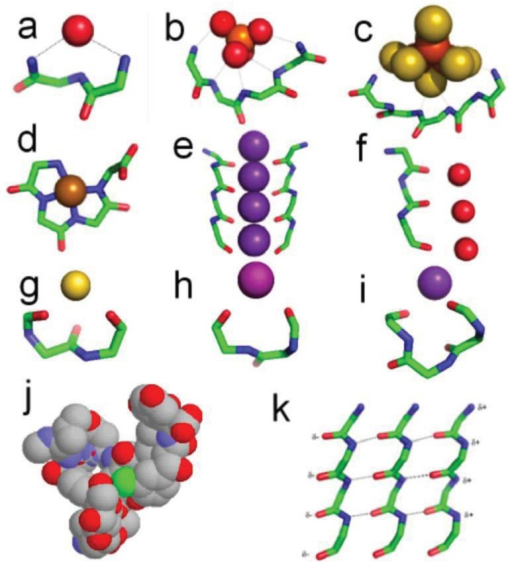 Motif structures (a) nest binding a carbonyl oxygen. (b) nest binding a phosphate ion. (c) nest binding a Fe4S4 iron-sulfur center. (d) covalent Ni+-tetrapeptide complex—a peptide pigment. (e) two of the four peptides forming the selectivity filter of the potassium channel. (f) the peptide forming the aquaporin channel. (g) catgrip bound to a calcium ion. (h) niche3 bound to a K+ ion. (i) niche4 bound to a K+ ion. (j) vancomycin, which can be regarded as a nest designed to bind a carboxylate group in the bacterial cell wall (the carboxylate of acetate is seen in sticks and the antibiotic is in spacefill). (k) three strands of α-sheet. (note the similarity in conformation with e and f). α-sheet, unlike β-sheet, has an inherent polarity, indicated by the partial charges δ+ and δ−. In (a-i) and (k) the side chains are omitted. Colors: carbon, green; oxygen, red; nitrogen, blue; sulfur, mustard; potassium, purple; iron, rust; nickel, brown; chlorine, green; calcium, yellow; phosphorus, orange.