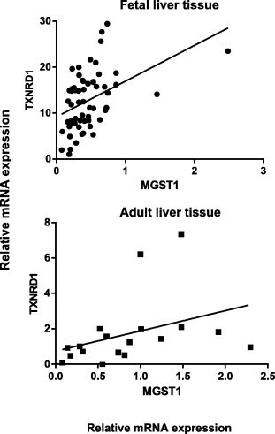 Correlation analyses between the relative mRNA expression of TXNRD1 and MGST1 in fetal (N = 59) and adult (N = 17) liver tissue were performed using Spearman rank method. There was a significant correlation between hepatic TXNRD1 and MGST1 mRNA levels in both fetal (r = 0.49, p < 0.0001) and adult liver tissue (r = 0.60, p = 0.01).
