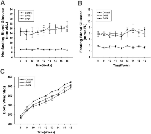 No influence on the blood glucose level or bodyweight of GK rats by E4 treatment. Non-fasting blood glucose (A), fasting blood glucose (B) and bodyweight (C) of rats with and without E4 intravitreal injection at 12 weeks of age (two-way repeated ANOVA for interaction: non-fasting blood glucose, F(16,243)=1.112, p=0.344; fasting blood glucose, F(16,243)=1.157, p=0.304; bodyweight, F(16,243)=1.336, p=0.176; n=10). Bodyweight and non-fasting and fasting blood glucose levels did not statistically differ between the GK control and E4-treated group from 12 to 16 weeks of age (two-way ANOVA followed by Bonferroni's test: non-fasting blood glucose, p=0.43; fasting blood glucose, p=0.921; bodyweight, p=0.576; n=10). Each datum point is expressed as the means ± SEM (n=10). GK rat: Goto-Kakizaki rat; E4: Exendin-4; Control: Wistar rats treated with sham injection (normal saline); G+NS: GK rats treated with normal saline; G+E4: GK rats treated with E4.