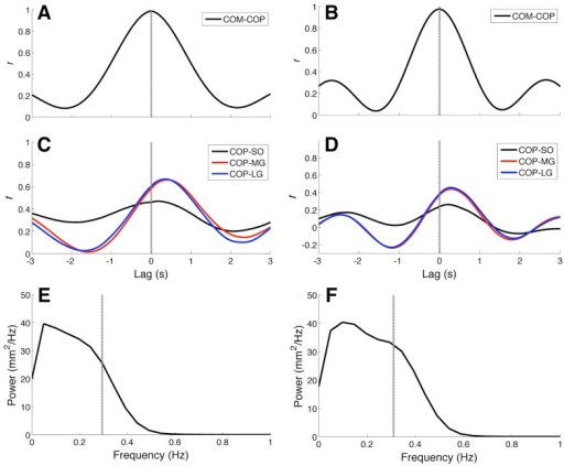Cross-correlation functions and centre of pressure (COP) power spectra for typical simulations carried out on Model 1 (graphs A, C, and E) and Model 2 (graphs B, D, and F).(A-B) Cross-correlation functions between centre of mass (COM) and COP. Note that for both models, cross-correlation peaks occurred at zero lag (dashed lines). (C-D) Cross-correlation functions between COP and muscle electromyograms (EMGs). Black, red, and blue curves represent cross-correlation functions for Soleus (SO), Medial Gastrocnemius (MG), and Lateral Gastrocnemius (LG), respectively. Irrespective of the model structure, there was a lag of about 300 ms between COP and EMG envelopes from the three muscles. (E-F) COP power spectra. Dashed line represents the 50% power frequency (). It is noteworthy that for Model 2 there was a broader bandwidth in comparison to Model 1.