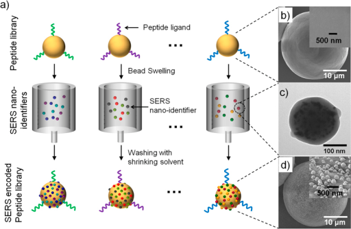 Schematic diagram of the peptide-encoding process with SERS nano-identifiers (SERS IDs) and electron microscopic images at each step. a) Peptide-encoding process by attaching SERS IDs. b) Field-emission scanning electron microscope (FE-SEM) images of TentaGel (TG) microbeads without encoding (inset: High-magnification image of TG bead surface). c) Transmission electron microscope image of SERS ID, consisted of Ag NPs embedded in silica nanosphere. d) FE-SEM images of TG beads with SERS encoding (inset: High-magnification image of polymer bead surface bearing SERS IDs).
