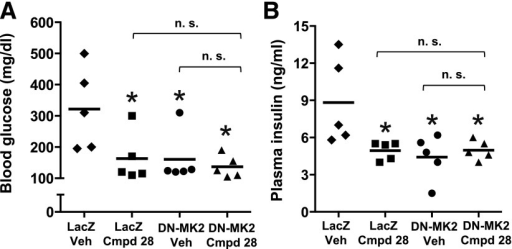 The metabolic improvement by cmpd 28 and dominant-negative MK2 in obese mice is not additive. Ten-week-old ob/ob mice were transduced with adeno-LacZ or adeno–T222A-MK2 (dominant negative), which inhibits hepatic MK2. Mice were then treated with 0.2 mg/kg body wt i.p. cmpd 28 or vehicle (Veh) for 7 days (n = 5 mice per group). After a 6-h fast, the mice were assayed for fasting blood glucose (A) and plasma insulin (B) (*P < 0.05) (mean ± SEM). n.s., nonsignificant.