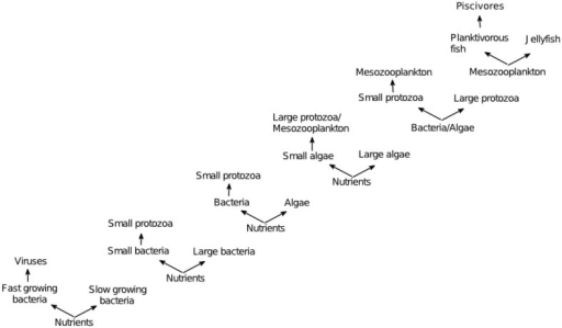 Examples of KtW acting at different trophic levels; bacteria-virus communities (Bohannan and Lenski, 2000), protozoa-bacteria food webs (Matz and Jürgens, 2003), protozoa-bacteria-algae food webs (Pengerud et al., 1987), phytoplankton-metazoan food webs (Steiner, 2003), and fish-jellyfish systems (Haraldsson et al., 2012). Adapted from Våge (2014).