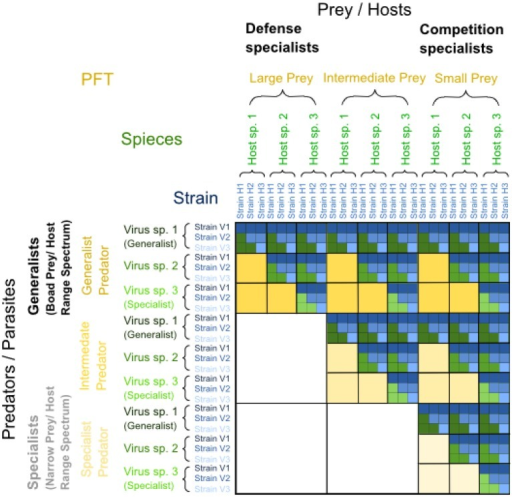 "Matrix illustrating examples of nested predator-prey and parasite-host interactions repeated at different trophic and phylogenetic levels of resolution, resulting in a fractal-like trophic interaction matrix. Within each upper triangular matrix resulting from nested infection, defense specialized prey are found on the left and competition specialized prey on the right, while generalist predators or viruses with broad prey or host range spectra are found on top and specialized predators or viruses with narrow prey or host range spectra at the bottom. The yellow level represents a level of low phylogenetic resolution, such as plankton functional types (PFTs), where prey may be categorized into small, intermediate and large prey, where small prey are competition specialists and large prey are defense specialists. Predators on this yellow level of PFTs may be generalists eating prey of different sizes or specialists eating prey of a particular size only. The green level within the yellow level of PFTs represents an intermediate level of phylogenetic resolution, such as ""species,"" whereas the blue level within the green level of ""species"" represents a high level of phylogenetic resolution, such as ""strains."" For a visual distinction of generalist vs. specialist strategies within each level of resolution, interactions with generalist predators or parasites are dark-colored, and those with specialists are light-colored. Modified from Våge (2014)."