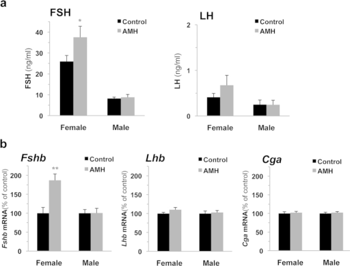 AMH stimulates FSH secretion and pituitary Fshb expression, in vivo, in female but not in male rats at postnatal day 18.Male and female rats were injected intraperitoneally at pnd 17 with 100 μl of saline solution containing or not 10 μg of AMH precursor (a conventionally used concentration in AMH in vivo studies). Serum LH and FSH secretion (a) and gonadotropin subunits gene expression (b), were determined 18 h after injection. Each value is a mean ± SEM of 13 rats. *P ≤ 0.05; **P ≤ 0.01 compared to control rats.