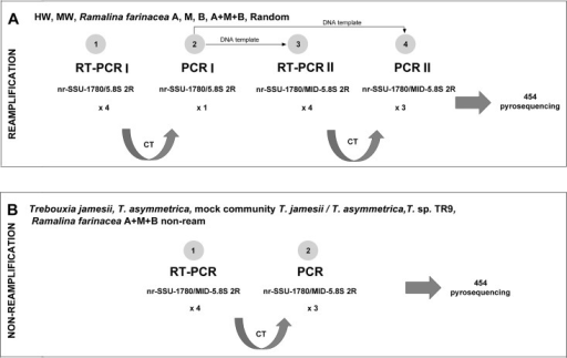 Scheme of Real Time-PCR (RT-PCR) strategies.For the preparation of the algal DNA, two strategies were followed: A a 'reamplification strategy' for the HW, MW, A, M, B, A+M+B and Random treatments and B a 'non-reamplification strategy' for samples of the individual T. jamesii, T. asymmetrica and Trebouxia sp. TR9 cultures, the mock community, and the A+M+B non-ream. See the text for more details. CT: cycle threshold.
