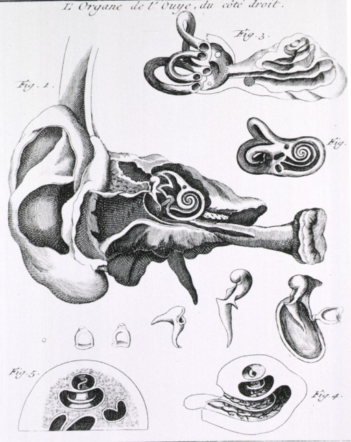 <p>Cross section of the ear, with vignettes.</p>