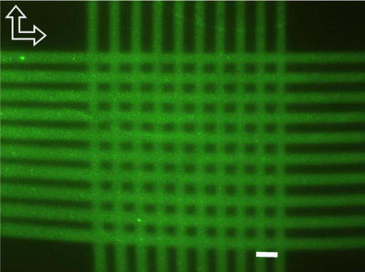 Analysis of the lane variation using the streptavidin-biotin affinity reaction. A microfluidic chamber with the same design and dimensions as described in Figure 1, but etched into a silicon chip and closed by bonding, was coated with streptavidin. Fluorescein-labeled biotin was then hydrodynamically guided in 50-μm-wide lanes over an area of 1000 × 1000 μm (arrows indicate the directions of flow). Ten lanes were applied evenly, and the procedure was repeated in a perpendicular direction, resulting in a grid of 100 intersections. The bended shape of the lanes in the lower and left part of the photomicrograph resulted from the hydrodynamic bending of the flow due to the quadratic shape of the microfluidic chamber. Scale bar, 100 μm.