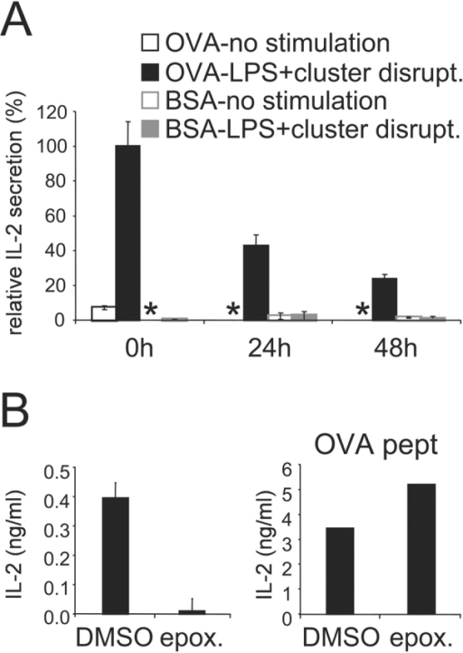 Cross presentation of OVA internalized prior DC activation. (A) Immature B6D2F1 DC were pulsed with OVA or BSA as a control (1 mg/ml) for 2 h, washed, and chased for 0 to 48 h before activation for 7 h with LPS and cluster disruption. Cells were then fixed and added to OT.1 T cells. (B) After a 24 h chase and 30 min before activation, epoxomicin 1 μM final was added to the cells and was also present during the 7 h stimulation period. As a control we used DMSO in which the drug was stocked. Cells were then fixed and added to OT.1 T cells. Right panel: OVA-pulsed cells and T cells were cultured in presence of OVA peptide. At 24 h, as marker of T cell activation IL-2 secretion was measured. One representative experiment out of three is shown, and the values represent the mean of triplicate wells. (*) indicates below level of detection.