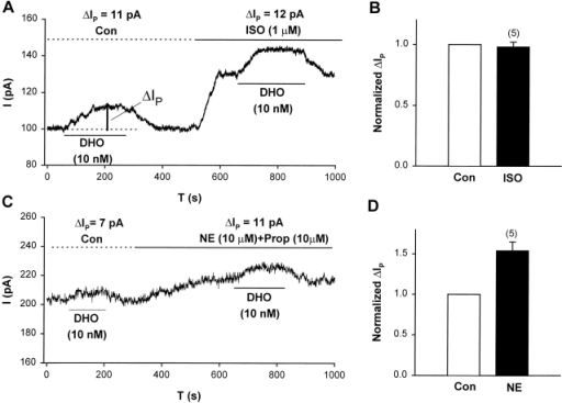 Adrenergic modulation of IP in guinea pig ventricular myocytes suggests the α2-isoform and not the α1-isoform is involved in stimulation of IP by low [DHO]. (A) A typical record of holding current in an experiment showing the effect of β-adrenergic activation with ISO on stimulation of IP by 10 nM DHO. The vertical bar labeled with ΔIP indicates the magnitude of the stimulation of IP. The large increase in holding current in the presence of ISO is mainly due to the activation of the Cl− conductance (Harvey and Hume, 1989; Bahinski et al., 1989). (B) Summary of the results from a total of five cells. ΔIP was normalized by its value in control conditions. The normalized ΔIP in the presence of ISO was 0.98 ± 0.04 (SD), suggesting that ISO had no effect on the stimulation (P = 0.51). (C) A typical record of holding current in an experiment showing the effect of α-adrenergic activation (NE and PROP) on ΔIP. (D) Summary of the results from a total of five cells. The normalized ΔIP in the presence of α-activation was 1.54 ± 0.11 (SD), suggesting that α activation enhanced the stimulation of IP (P = 0.008).