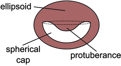 Schematic of acetabular chamber.A simplified scheme of the acetabulum where the envelope is depicted as an ellipsoid, the internal cavity as a spherical cap and the protuberance as a sort of paraboloid.