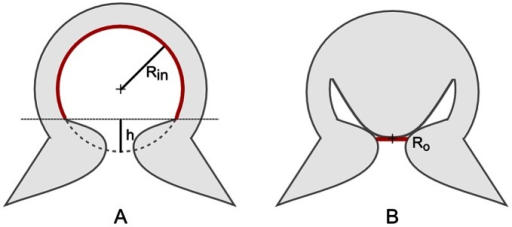 Schematic of the surfaces of action involved in adhesion.A) In Kier and Smith model [14], [15] the acetabular chamber is depicted as a hollow spherical cavity. Rin is the acetabular internal radius and h is the height of spherical cap that does not take part to suction. B) In the model proposed in this work the acetabular chamber presents a protuberance acting on the orifice and maintaining low pressure in the infundibular portion of the sucker. Ro is the radius of the orifice.