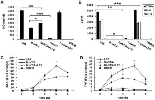 BoNT/A inhibited the production of LPS-induced pro-inflammatory mediators in RAW264.7 cells.A and B, production of NO and proinflammatory cytokines in LPS-stimulated RAW264.7 cells with or without BoNT/A pretreatment. RAW264.7 cells were pretreated with 1 nM BoNT/A or 1 nM BoNToxoid/A for 24 h, and then stimulated with or without 1 μg/ml LPS. Culture media were collected at 24 h to measure NO (A), TNFα, IL-6, and IL-12 (B) concentrations using the Griess reaction and sandwich ELISA, respectively. Three independent experiments were performed, and the data are the mean ± S.D. *, p<0.05 vs. LPS alone. C and D, quantification of mRNA expression of Tnf and iNOS in LPS-stimulated RAW264.7 macrophages with or without BoNT/A pretreatment. Total RNAs were isolated, and mRNA levels of iNOS and TNFα were analyzed with qRT-PCR. GAPDH expression was used as an internal control for RT-PCR. Representative results of three independent experiments are shown.
