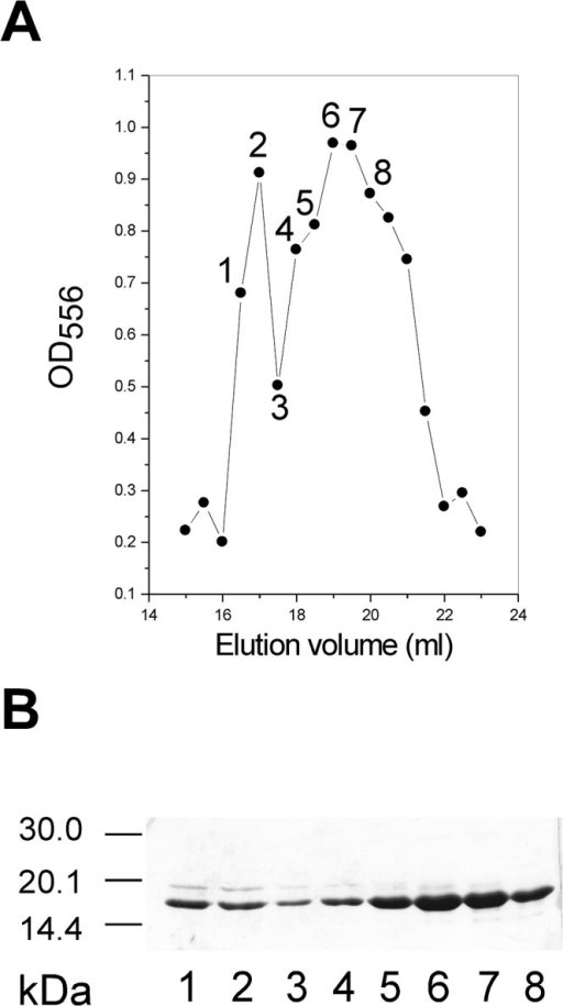 "The CTP-TMR and HMGA2Δ95–108 co-eluting in gel-filtration chromatography.The CTP-TMR was prepared as described under ""Materials and Methods"" and incubated with HMGA2Δ95–108 at 24°C for 30 min in BPES buffer. The CTP-TMR and HMGA2Δ95–108 mixture was then subjected to a Sephacryl S-100 HR filtration column (1×50 cm) equilibrated with BPES buffer. Gel filtration profile of the CTP-TMR binding to HMGA2Δ95–108 was monitored by a graph of OD556 versus elution volume (A) and a 15% SDS PAGE gel (B). Lanes 1 to 8 of the SDS-PAGE gel (B) correspond to the fractions 1 to 8 labeled in panel a. Free HMGA2Δ95–108 and the CTP-TMR were eluted at 22 and 30 ml respectively in the column."
