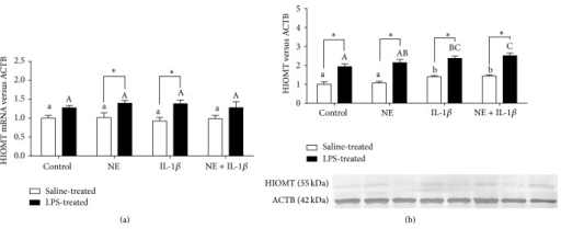The effects of norepinephrine (NE, 10 μM), interleukin- (IL-) 1β (75 pg/mL), and mixture of NE with IL-1β on hydroxyindole-O-methyltransferase (HIOMT) relative gene (a) and protein (b) expression in the pineal gland explants collected from saline- and lipopolysaccharide- (LPS-) treated ewes. Different lowercase letters indicate significant (P < 0.05) differences within the saline-treated group; different capital letters indicate differences within the LPS-treated group; asterisk designates a significant (P < 0.05) difference between the saline- and LPS-treated groups; control: no NE/IL-1β treatment.