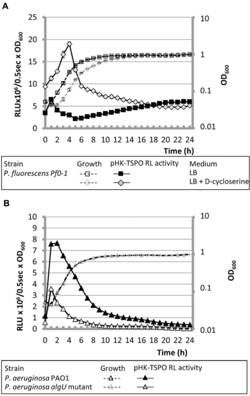 AlgU is related to the operonic structure transcription. (A) The growth of P. fluorescens Pf0-1 containing pHK-TSPO and the relative bioluminescence levels generated by pHK-TSPO are shown when bacteria were grown in microtiter wells in LB with or without D-cycloserine. (B) Growth and relative bioluminescence levels of P. aeruginosa PAO1 and its isogenic algU mutant containing pHK-TSPO in LB in microtiter wells.
