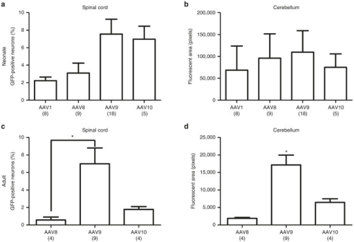 Quantification of GFP expression levels after i.v. administration of AAV1, AAV8, AAV9, or AAV10 to either neonatal or adult rats. There was no difference in serotype transduction efficiency in the (a) neonatal spinal cord or (b) cerebellum, but AAV9 resulted in significantly higher GFP levels in adult rats. AAV9 showed significantly increased motor neuron transduction in (c) the lumbar spinal cord compared to AAV8 (*P < 0.05, ANOVA/Bonferroni) and had significantly higher transduction efficiency in the (d) cerebellum compared to AAV8 or AAV10 (P < 0.01–0.05, ANOVA/Bonferroni). N values are listed for each group. ANOVA, analysis of variance; GFP, green fluorescent protein; i.v., intravenous.