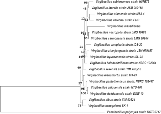 Phylogenetic tree highlighting position of Virgibacillus senegalensis strain SK-1T (= CSUR P1101 = DSM 28585) relative to other type strains of Virgibacillus albus strain YIM 93624 (NR_109613.1), Virgibacillus kekensis strain YIM kkny16 (NR_042744.1), Virgibacillus alimentarius strain J18 (NR_108710.1), Virgibacillus marismortui strain M3-23 (GQ282501.1), Virgibacillus necropolis strain LMG 19488 (NR_025472.1), Virgibacillus carmonensis strain LMG 20964 (NR_025481.1), Virgibacillus subterraneus strain H57B72 (FJ746573.1), Virgibacillus zhanjiangensis strain JSM 079157 (FJ425904.1), Virgibacillus litoralis strain JSM 089168 (FJ425909.1), Virgibacillus dokdonensis strain DSW-10 (NR_043206.1), Virgibacillus siamensis strain MS3-4 (AB365482.1), Virgibacillus salarius strain SA-Vb1 (NR_041270.1), Virgibacillus halophilus strain 5B73C (NR_041358.1), Virgibacillus natechei strain FarD (NR_132721.1), Virgibacillus chiguensis strain NTU-101 (NR_044086.1), Virgibacillus dokdonensis strain DSW-10 (NR_043206.1), Virgibacillus campisalis strain IDS-20 (GU586225.1), Virgibacillus pantothenticus strain NBRC 102447 (AB681789.1), Virgibacillus halodenitrificans strain NBRC 102361 (AB681753.1), Virgibacillus byunsanensis strain ISL-24 (FJ357159.1), Virgibacillus massiliensis strain Vm-5 (HG931931.1) and Paenibacillus polymyxa strain KCTC3717 (AY359637.1). GenBank accession numbers are indicated in parentheses. Sequences were aligned using Clustal W (http://www.clustal.org/clustal2/), and phylogenetic inferences were obtained using maximum-likelihood method within MEGA 6 (http://www.megasoftware.net/mega.php). Paenibacillus polymyxa was used as outgroup. Scale bar = 0.005% nucleotide sequence divergence.