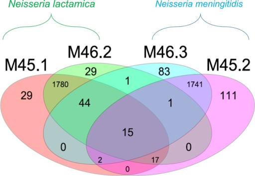 Venn diagram of a whole-genome MLST comparison (loci, 1,887) showing shared alleles for N. meningitidis (M46.3 and M45.2) and N. lactamica (M45.1 and M46.2) isolates from nasopharyngeal carriage in two individuals. Cocolonizing isolates M45.1 and M45.2 shared 34 alleles while cocolonizing isolates M46.3 and M46.2 shared 61 alleles.