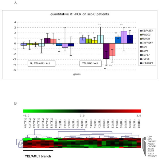 Validation of the selected genes for TEL/AML1 by quantitative RT-PCR using the independent Set-C patients. (A) Expression in log2, of mean relative levels of TCFL5, PIK3C3, CBFA2T3, TNFRSF7, RUNX1, EGFL7, TP53INP1, LSP1 and CD9 in TEL/AML1-positive (n = 7) and TEL/AML1-negative (n = 20) Set-C samples.LSP1 and CD9 are significantly (P < 0.01) under-expressed in TEL/AML1-positive ALL patients and each of the seven other genes is significantly (with either P < 0.01* or P < 0.05**) over-expressed in TEL/AML1-positive ALL patients; these findings agree with microarray data obtained with Set-A and Set-B patients. (B) Hierarchical clustering analysis (Euclidean distance and complete linkage) of Set-C patients using quantitative RT-PCR data for the nine tested genes. The dendrogram clearly distinguishes TEL/AML1-positive patients from TEL/AML1-negative patients.