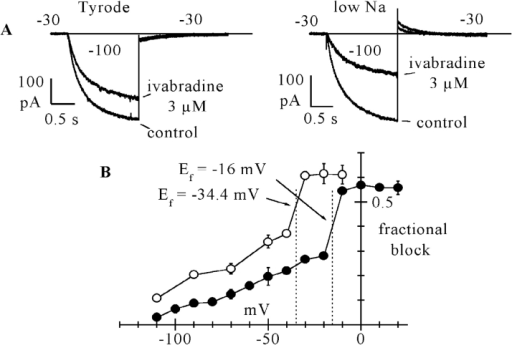 Dependence of the ivabradine-induced If block by the current driving force. (A) Sample If traces from two cells showing the different degrees of steady-state block induced by 3 μM ivabradine at the same test potential of −30 mV with normal (140 mM, left) and reduced (35 mM, right) external Na+ concentration, as measured by activation/deactivation protocols (−100/−30 mV). Fractional block was ∼24% in normal and 54% in reduced Na+ concentration. Notice that at −30 mV, as expected, the deactivating If tail was inward in normal Na+, and outward in reduced Na+ conditions. (B) Comparison between mean fractional block curve in normal Tyrode solution (filled circles, as from Fig. 5) and in lowered Na+ (open circles). Each point of the curve in low Na+ represents the mean ± SEM from 3–6 cells. Vertical dotted lines correspond to the If reversal potentials measured from mean fully activated I/V relations from n = 7 cells in the two conditions (Ef = −16.0 mV in normal Tyrode and Ef = −34.4 mV in 35 mM Na+ as indicated). Arrows show the intercepts of the block curves with corresponding Ef values.