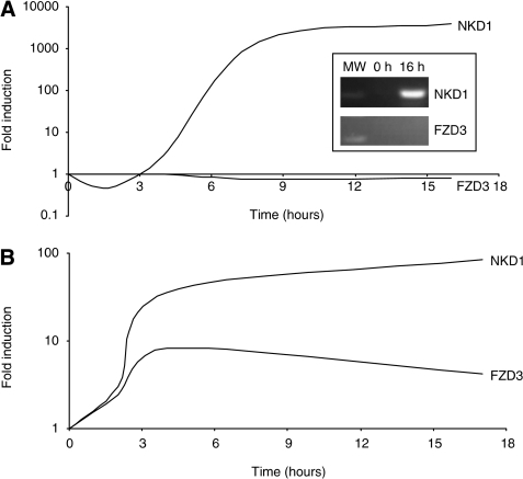 Induction of NKD1 and FZD3 in cultured cells. (A) Lithium chloride induction of NKD1 mRNA in FHs74Int cells. Confluent cells were treated with lithium chloride and sampled over a 16-h time course. Expression of FZD3 and NKD1 was measured by real-time RT–PCR and the level relative to untreated control cells determined. The inset panel shows qualitative RT–PCR analysis of the induced cells at 0 and 16 h. (B) Wnt3a induction of NKD1 and FZD3 mRNA in HeLa cells. Confluent cells were treated with Wnt3a-conditioned medium and sampled over a 17-h time course. Expression of NKD1 and FZD3 was measured by real-time RT–PCR and the level relative to untreated control cells determined.